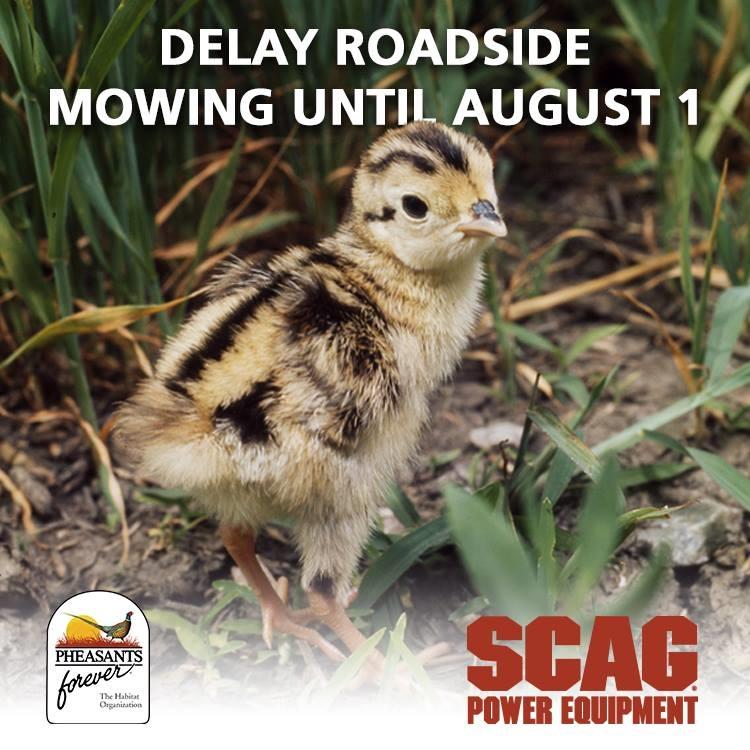 Scag Delay Mowing Pic